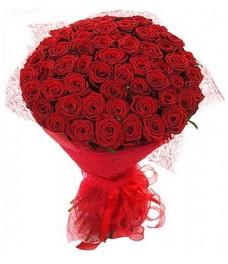 51 Роза R576