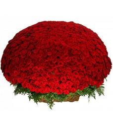1001 Роза R037