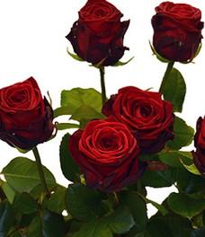 Купить живые розы москва купить цветы из ткани