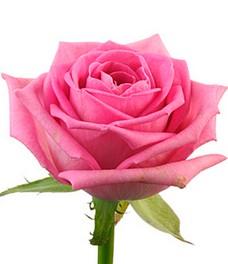 1 Роза R045