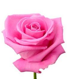 1 Роза R092