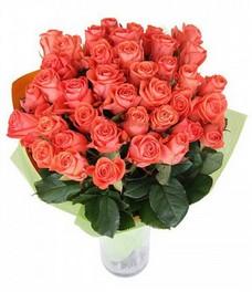 21 Роза R515