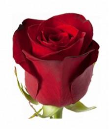 1 Роза R088