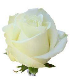 1 Роза R091