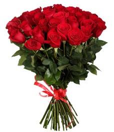 21 Роза R417