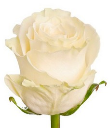 1 Роза R382