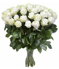 21 Роза R419