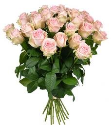 21 Роза R422
