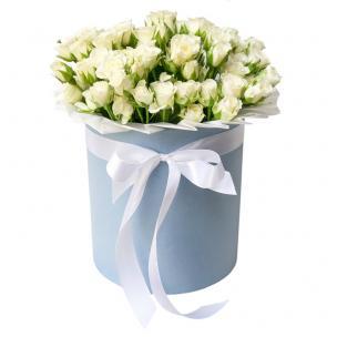 Кустовые Розы P082