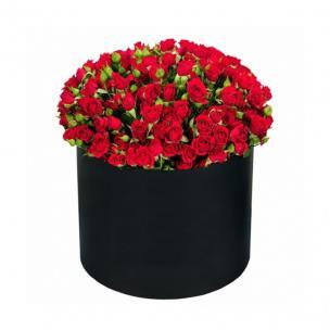 Кустовые Розы P085
