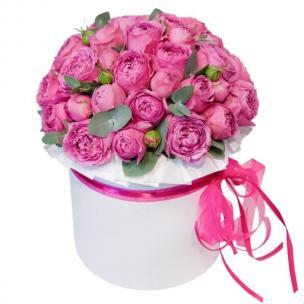 Кустовые Розы P086