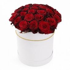 Розы P001