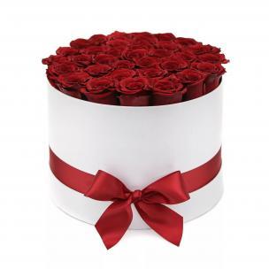 Розы P004