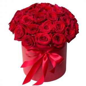 Розы P009