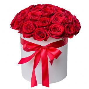 Розы P012