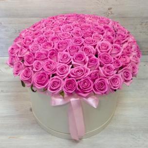 Розы P024