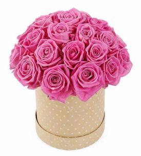 Розы P026
