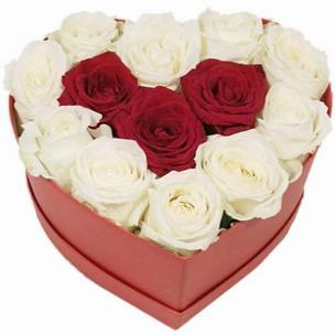 Розы P035