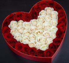 Розы P037