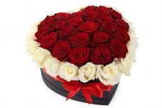 Розы P042