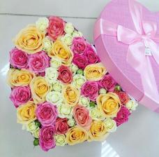 Розы P044