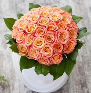 Розы P064