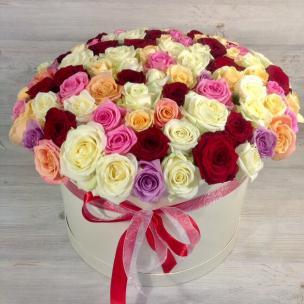 Розы P066
