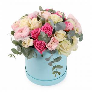 Розы P068