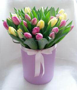 Тюльпаны P137