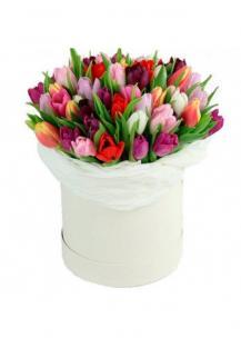 Тюльпаны P138