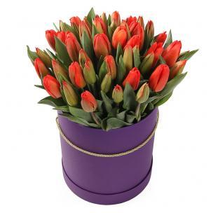 Тюльпаны P144