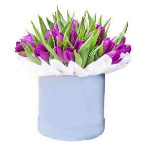 Тюльпаны P146