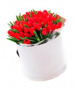 Тюльпаны P147
