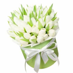 Тюльпаны P148