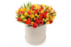 Тюльпаны P150