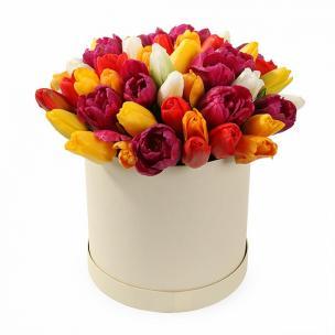 Тюльпаны P154