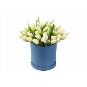 Тюльпаны P156
