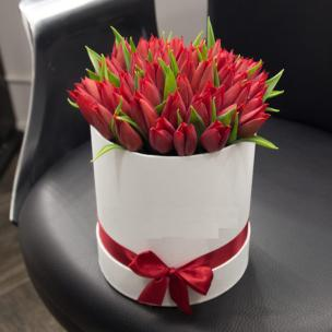 Тюльпаны P162