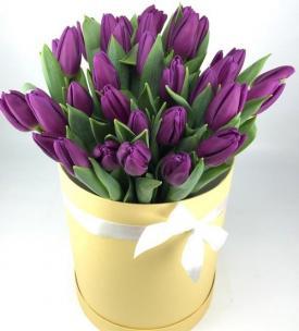 Тюльпаны P165