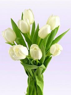 9 Тюльпанов T001