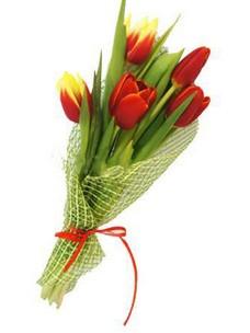 5 Тюльпанов T004