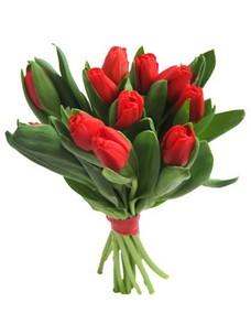 11 Тюльпанов T008