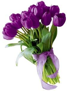 15 Тюльпанов T014