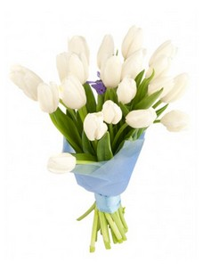 19 Тюльпанов T016