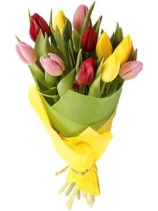11 Тюльпанов T018