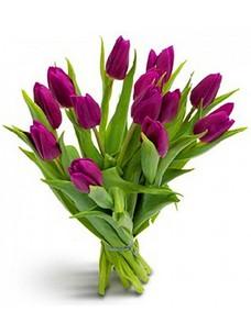 15 Тюльпанов T021