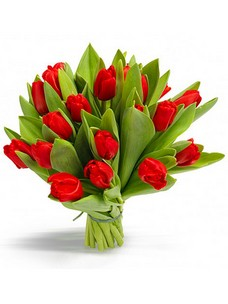 19 Тюльпанов T024
