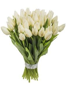 31 Тюльпан T047