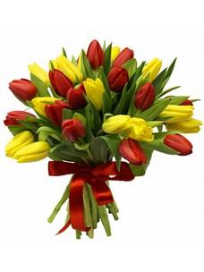 31 Тюльпан T049