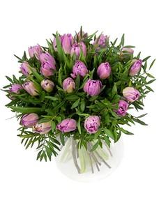 25 Тюльпанов T062